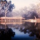 River Murray misty morning by Des Berwick