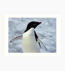Adelie Penguin Portrait Art Print