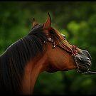 Arabian Head Study by SylanPhotos