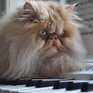 My first piano lesson by PhotoTamara