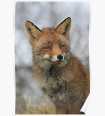 Red Fox 3452 Poster