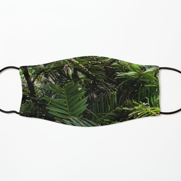 Wollemi Pine, the 'living fossil' tree of Australia Kids Mask