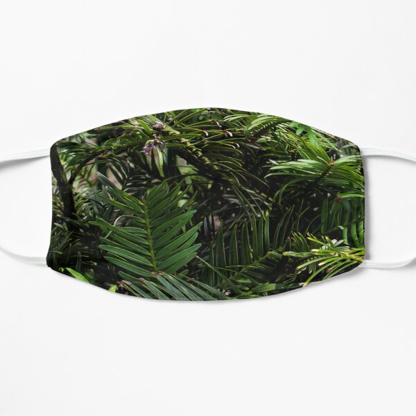 Wollemi Pine, the 'living fossil' tree of Australia Small Mask