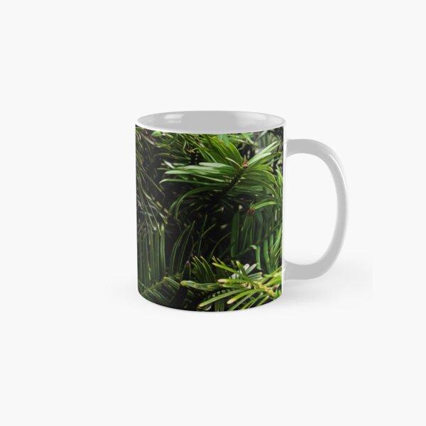 Wollemi Pine, the 'living fossil' tree of Australia Classic Mug