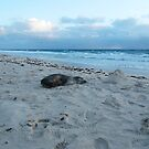 Sand Castle Seal Takes A Snooze by Robert Phillips
