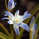 Spring Magic ~ by Renee Blake