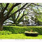 Reaching Oaks  by Sandra Russell