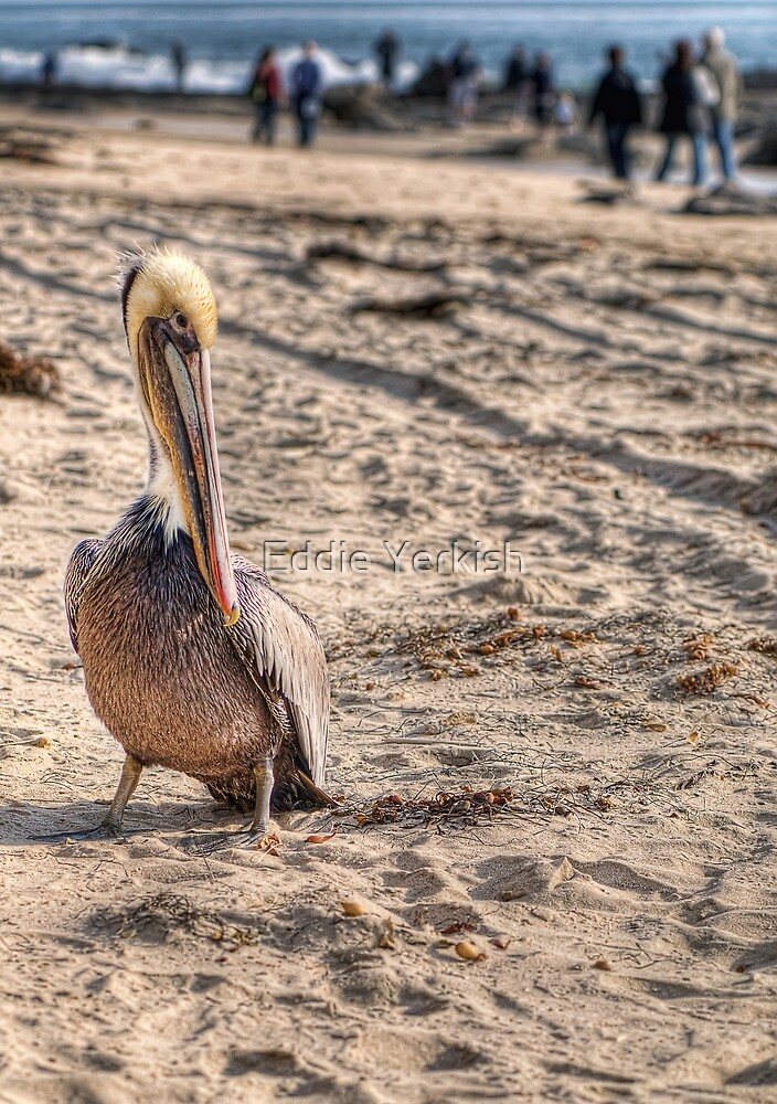 Pelican On The Beach by Eddie Yerkish