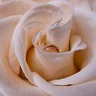 Cream by Katherine Murray