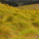 Alpine Button Grass Plain by Janice E. Sheen