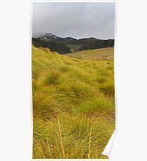 Alpine Button Grass Plain Poster