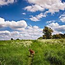 Wander with Wonder  by Vicki Field
