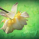 Spring♥ by Lea  Weikert