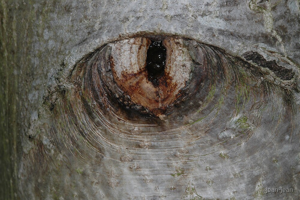 the eye of the tree ... by jean-jean