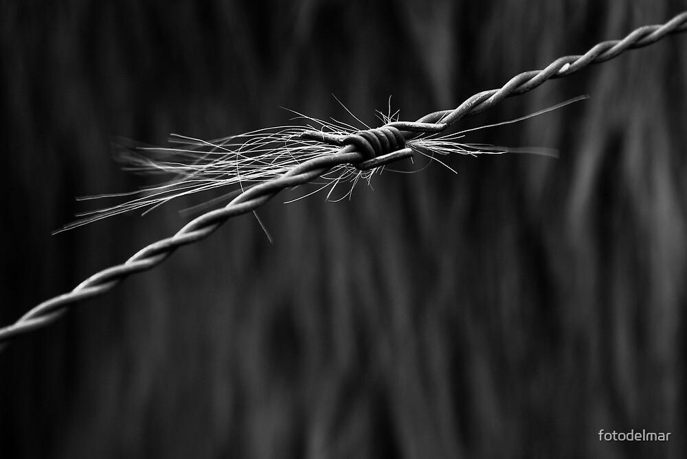 contrast by fotodelmar