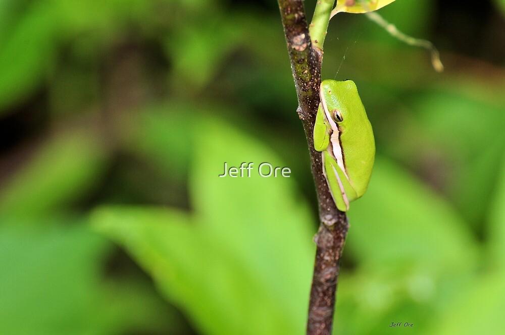 Green Tree Frog 2 by Jeff Ore