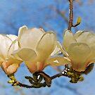 The magnolia chandelier by almaalice
