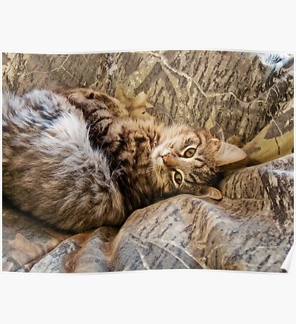 Camo Kitty Poster