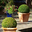 Box Topiary by Fara