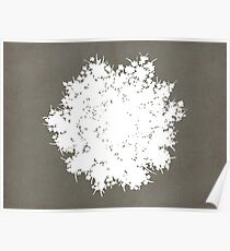 Queen Anne's Lace in Gray & White Poster