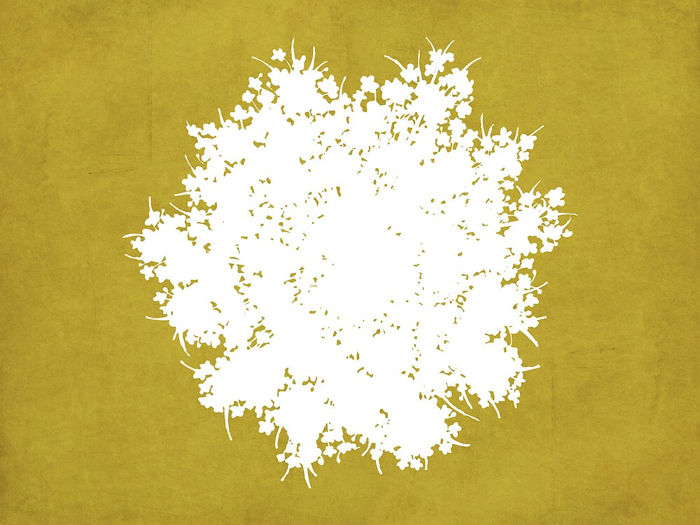 Queen Anne's Lace in Gold & White by Elle Campbell