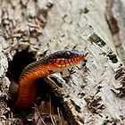 The Snake of My Adventure by KRincker