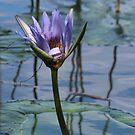 Purple  by Louise Linossi Telfer