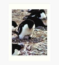 Aelelie Penguins in the Rookery Art Print