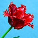 Red Frilly Tulip by Bev Pascoe