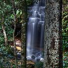 Falls Between the Trees by peter  jackson