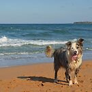 The Bandit at the Beach by Kate Howarth