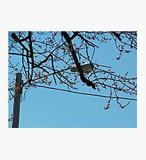 Streetlight Branches Photographic Print
