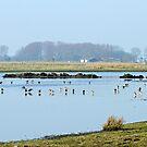 Wetlands by Robert Abraham