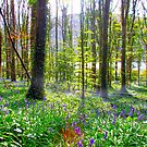 forest of bluebells by stevieblack