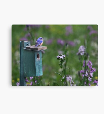 The New Landlord Canvas Print