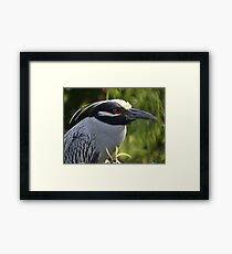 Portrait Of A Yellow Crowned Heron - Retrato De Un Garza Coronada Amarilla Framed Print