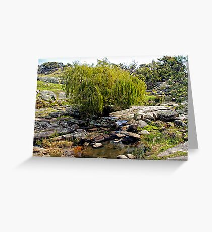 Weeping Willow Tree at Pyalong Greeting Card