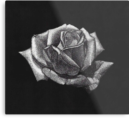 """Scratchboard Rose "" Metal Prints by emilyRose3 