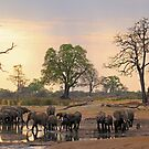 Sundowners by Explorations Africa Dan MacKenzie