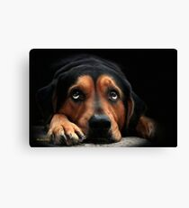 Puppy Dog Eyes Canvas Print