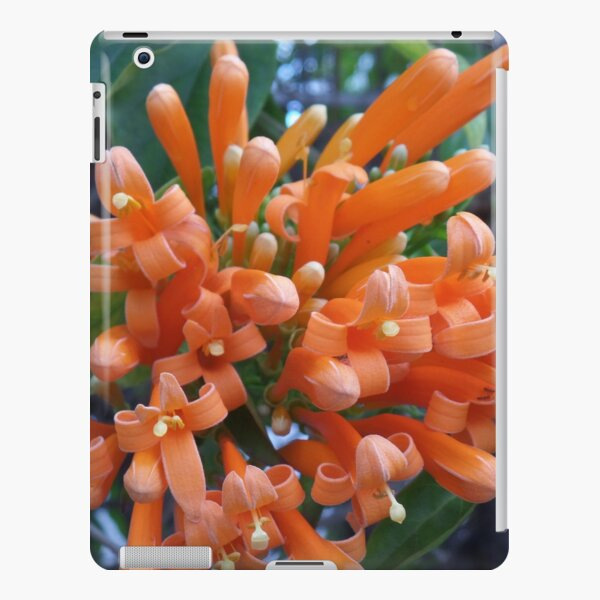 Orange Trumpet Creeper  iPad Snap Case