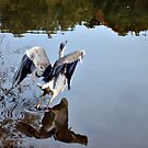 Great Blue Heron at Grover Cleveland Park, Essex Fells NJ - reflections3 by Jane Neill-Hancock