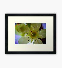 Macro Flower 4 Framed Print