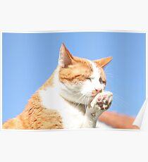 Washing cat Poster