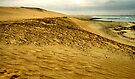 The Skeleton Coast by Carole-Anne