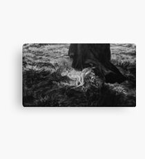 WITCH  HARE Canvas Print