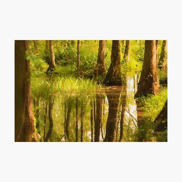 Ebenezer Swamp Photographic Print