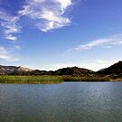 Cachuma Lake California by Renee D. Miranda