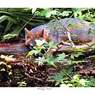 Resting Gray Fox by Sandra Russell