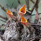 Hurry up mom or dad we are hungry! by Anthony Goldman